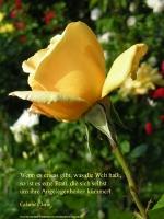 Grußkarte zum Internationalen Frauentag mit gelber Rose und einem deutschsprachigem Zitat von Calamity Jane: Wenn es etwas gibt, was die Welt haßt, so ist es eine Frau, die sich selbst um ihre Angelegenheiten kümmert.