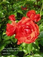 Grußkarte zum Internationalen Frauentag mit rosa Rose und einem deutschsprachigem Zitat von Hedwig Dohm: Alles was ich schreibe - steht im Dienste der Frauen.
