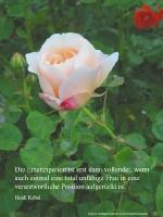 Grußkarte zum Internationalen Frauentag mit lachsfarbenen Rose und einem deutschsprachigem Zitat von  Heidi Kabel: Die Emanzipation ist erst dann vollendet, wenn auch einmal eine total unfähige Frau in eine verantwortliche Position aufgerückt ist.