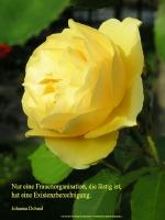 Grußkarte zum Internationalen Frauentag mit gelber Rose und einem deutschsprachigem Zitat von Johanna Dohnal: Nur eine Frauenorganisation, die lästig ist, hat eine Existenzberechtigung.