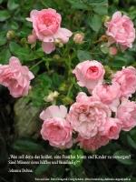 Grußkarte zum Internationalen Frauentag mit rosa Röschen und einem deutschsprachigem Zitat von Johanna Dohnal: Was soll den das heißen, eine Frau hat Mann und Kinder zu versorgen? Sind Männer denn hilflos und unmündig?