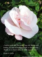 Grußkarte zum Internationalen Frauentag mit einer rosa Rose und einem Zitat von Olympe de Gouges: Frauen, wacht auf! Was auch immer die Hürden sein werden, die man euch entgegenstellt, es liegt in eurer Macht, sie zu überwinden.