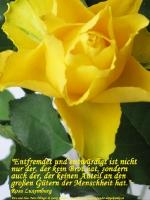 Grußkarte zum Internationalen Frauentag mit gelber Rose und einem deutschsprachigem Zitat von Rosa Luxemburg: Entfremdet und entwürdigt ist nicht nur der, der kein Brot hat, sondern auch der, der keinen Anteil an den großen Gütern der Menschheit hat.