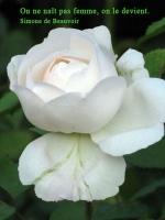 Grußkarte zum  Frauentag mit weißer Rose und französischsprachigem Zitat von Simone de Beauvoir: On ne naît pas femme, on le devient.