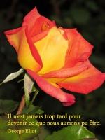 Grußkarte zum Frauentag mit gelb-roter Rose und französischsprachigem Zitat von George Eliot: Il n'est jamais trop tard pour devenir ce que nous aurions pu être.