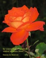 Grußkarte zum Frauentag mit roter Rose und französischsprachigem Zitat von Simone de Beauvoir: Se vouloir libre, c'est aussi vouloir les autres libres. Simone de