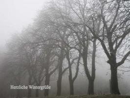 Weihnachtskarte Baueme im Nebel mit Text