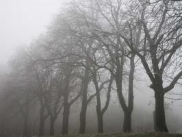 Weihnachtskarte Baueme im Nebel ohne Text