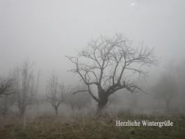 Weihnachtskarte Baum im Nebel mit Text