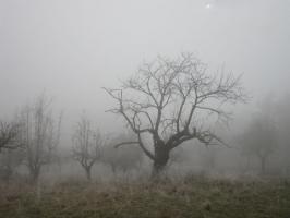 Weihnachtskarte Baum im Nebel ohne Text