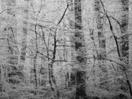 Weihnachtskarte Wald im Nebel ohne Text