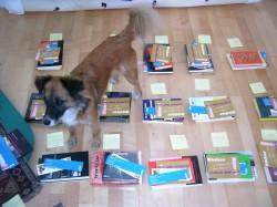 Zwetschke hilft bei der Bücherauswahl-2